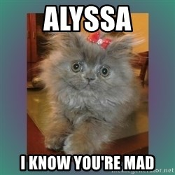 cute cat - Alyssa I know you're mad
