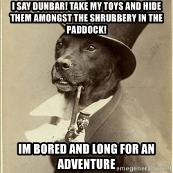 rich dog - i say dunbar! take my toys and hide them amongst the shrubbery in the paddock! im bored and long for an adventure