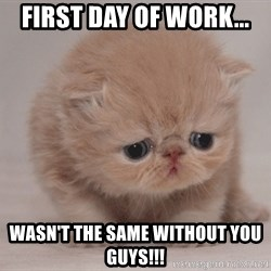 Super Sad Cat - First day of work... wasn't the same without you guys!!!