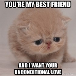 Super Sad Cat - You're my best friend and i want your unconditional love