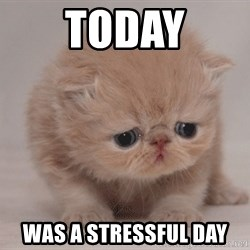 Super Sad Cat - Today was a stressful day