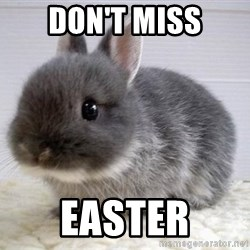 ADHD Bunny - DON'T MISS EASTER