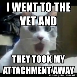Surprised Cat - I went to the vet and                          they took my attachment away