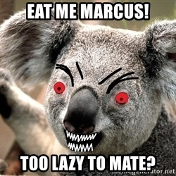 Abortion Koala - Eat Me Marcus! Too lazy to mate?