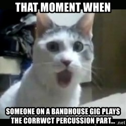 Surprised Cat - That moment when Someone on a bandhouse gig plays the corrwct percussion part...