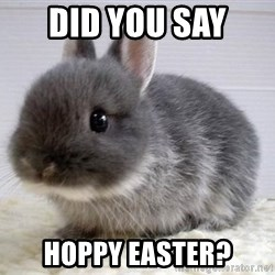 ADHD Bunny - Did you say  Hoppy Easter?