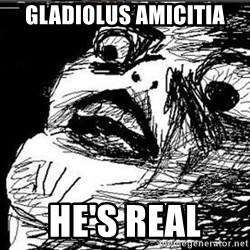 Gasp - Gladiolus Amicitia He's real