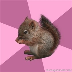Shipper Squirrel -