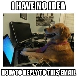 No Computer Idea Dog - I have no idea how to reply to this email