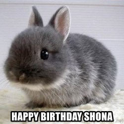 ADHD Bunny -  Happy Birthday Shona