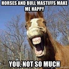 Horse - HORSES AND BULL MASTIFFS MAKE ME HAPPY YOU, NOT SO MUCH