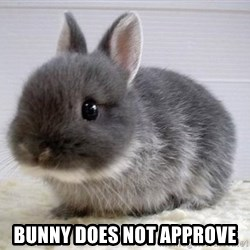 ADHD Bunny -  bunny does not approve