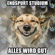 Original Stoner Dog - Endspurt studium Alles wird gut