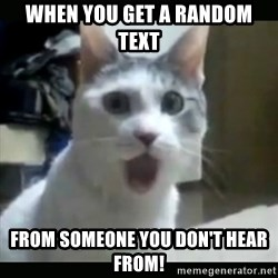 Surprised Cat - When you get a random text  from someone you don't hear from!