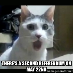 Surprised Cat -  There's a second referendum on May 22nd