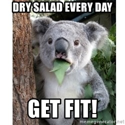 surprised koala - DRY SALAD EVERY DAY GET FIT!