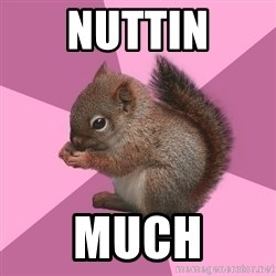 Shipper Squirrel - nuttin much