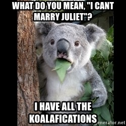 "Koala can't believe it - What do you mean, ""I cant marry Juliet""? I have all the koalafications"