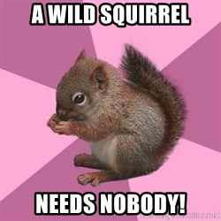 Shipper Squirrel - A wild squirrel needs nobody!
