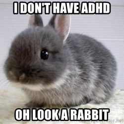ADHD Bunny - I don't have ADHD oh look a rabbit