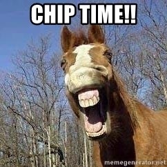Horse - CHIP TIME!!