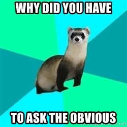 Obvious Question Ferret - Why did you have To ask the obvious