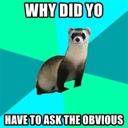 Obvious Question Ferret - Why did yo Have to ask the obvious