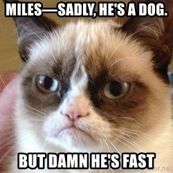 Angry Cat Meme - Miles—Sadly, he's a dog.  But damn he's fast