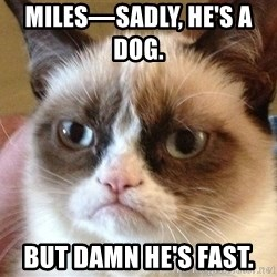 Angry Cat Meme - Miles—sadly, he's a dog.       But damn he's fast.