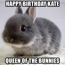 ADHD Bunny - HAPPY BIRTHDAY KATE QUEEN OF THE BUNNIES