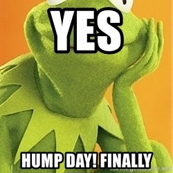 Kermit the frog - yes Hump Day! finally
