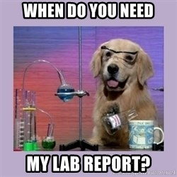 Dog Scientist - When do you need My lab report?