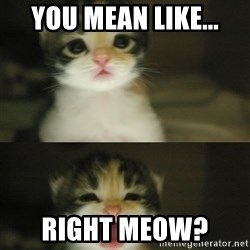 Adorable Kitten - you mean like... RIGHT meow?