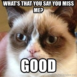 Angry Cat Meme - What's that you say you miss me? Good