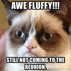Angry Cat Meme - Awe fluffy!!! Still not coming to the reunion.