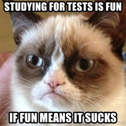 Angry Cat Meme - Studying for tests is fun if fun means it sucks