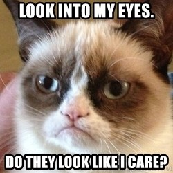 Angry Cat Meme - Look into my eyes. Do they look like I care?