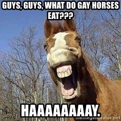 Horse - guys, guys, what do gay horses eat??? HAAAAAAAAY.