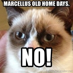 Angry Cat Meme - Marcellus Old Home Days. NO!
