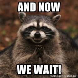 evil raccoon - And now We wait!
