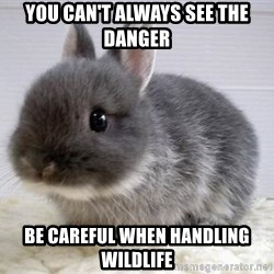 ADHD Bunny - You can't always see the danger Be careful when handling wildlife