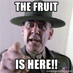 Angry Drill Sergeant - THE FRUIT IS HERE!!