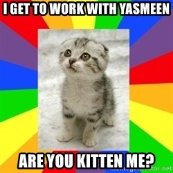 Cute Kitten - I get to work with Yasmeen Are you kitten me?