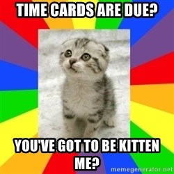 Cute Kitten - Time cards are due? You've got to be kitten me?
