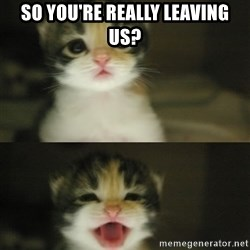 Adorable Kitten - so you're really leaving us?