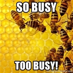 Honeybees - So Busy Too Busy!