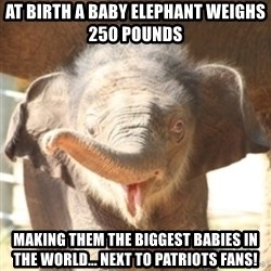 baby elephant - At Birth A Baby Elephant Weighs 250 pounds Making Them The Biggest Babies In The World... Next To Patriots Fans!