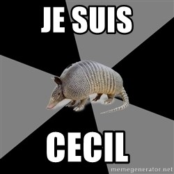 English Major Armadillo - Je suis CECIL