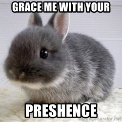 ADHD Bunny - grace me with your preshence