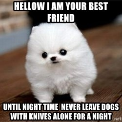 more meat for my duck - hellow i am your best friend until night time  never leave dogs with knives alone for a night